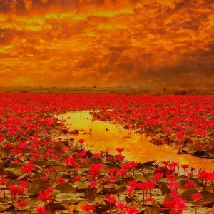 Rote Blumen in deinem Feld mit goldenem Fluss