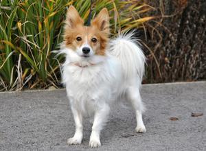 Hund geht mit zur Familientherapie