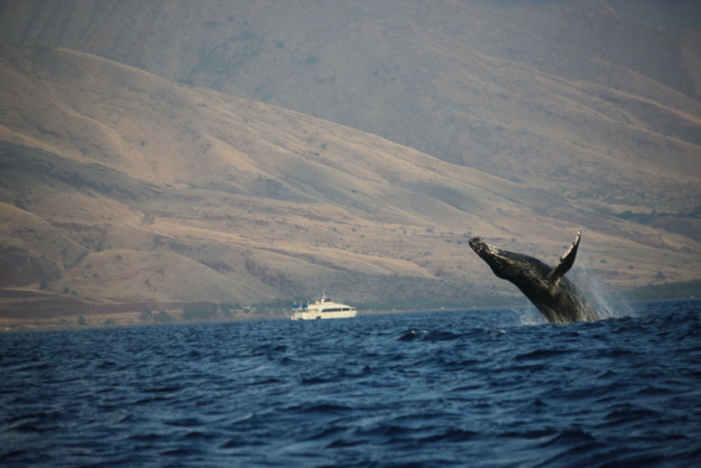 Wal im Wasser mit toller Natur